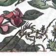 Nomadum Mantis— Богомол (2012)